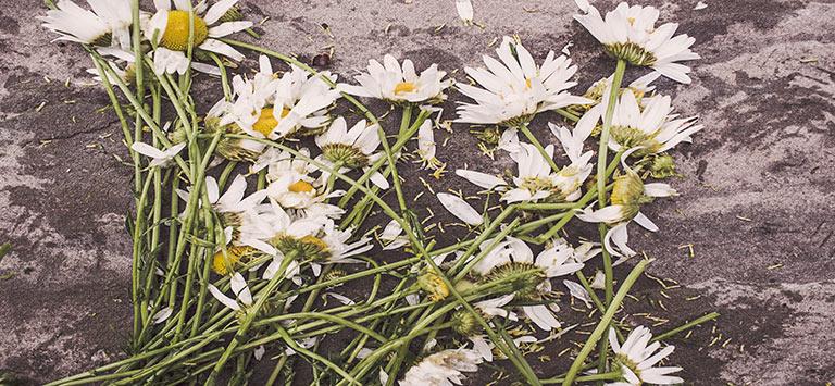 milton-funeral-limos